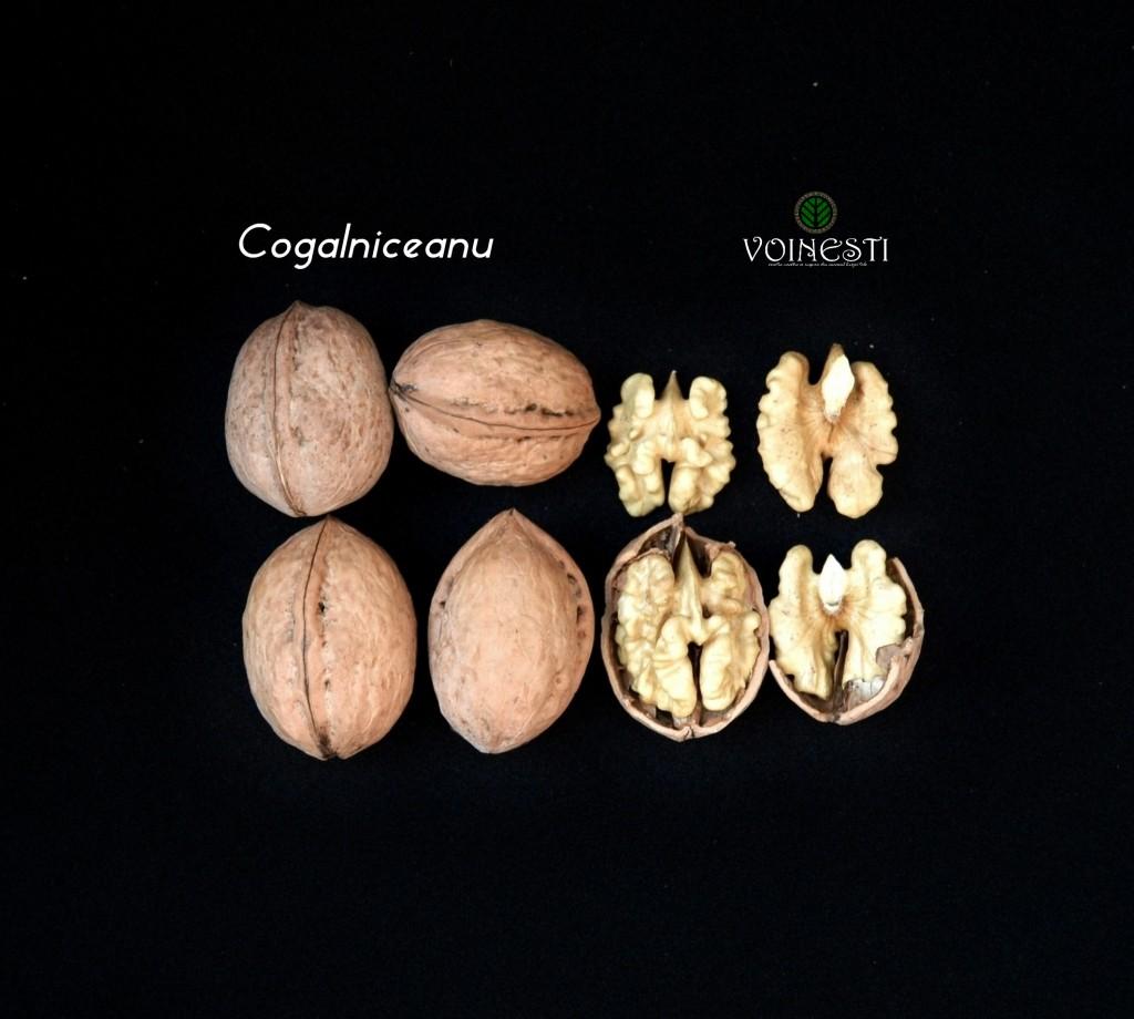 cogalniceanu